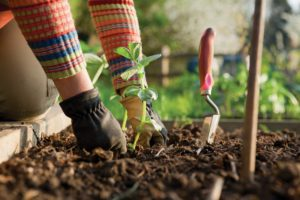 gardening services for garden maintenance